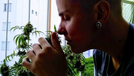 Cannabis tratamento Cancer